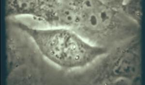 13.Hromosomy i individual'noe razvitie organizma