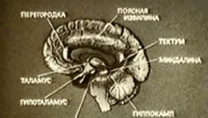 18.Fiziologija Motivacij i Jemocij