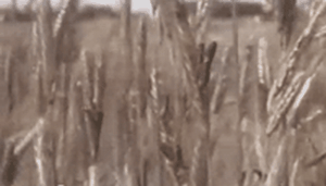 5_parazitnye griby