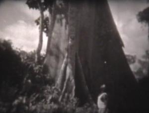Научфильм. Экваториальные леса Африки