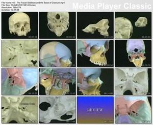 Видеоатлас по анатомии человека. Внутренние органы. Половые органы