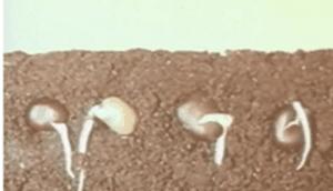 Научфильм. Движение растений