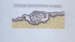 Научфильм. Эмбриональное развитие птиц