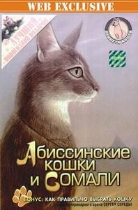 Породы кошек: Абиссинские кошки и Сомали  ОНЛАЙН