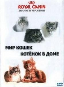 Котенок в доме. Советы по уходу за кошками  ОНЛАЙН